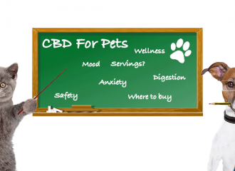 cbd for pets article