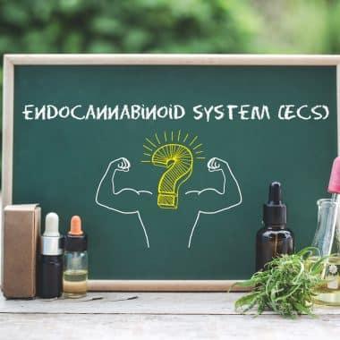 Πώς λειτουργεί το CBD: Eνδοκανναβινοειδές σύστημα (ΕΚΣ)