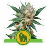 royal-gorilla-automatic_9750_1_