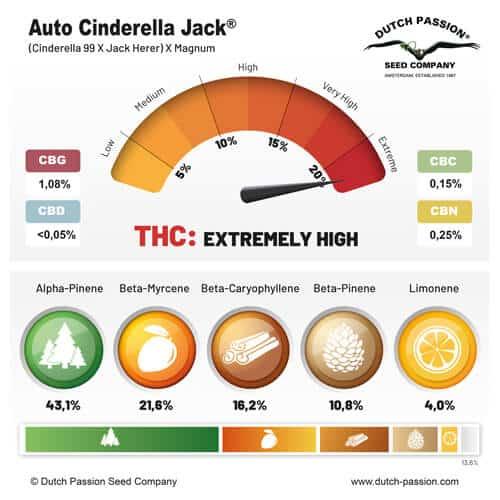 auto-cinderella-jack-terpenes-and-cannabinoids-dutch-passion-cannabis-seed-company_1